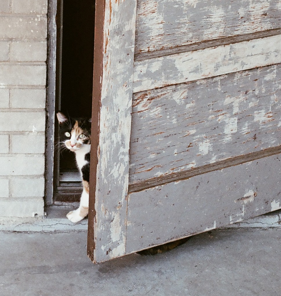 2014-10-Life-of-Pix-free-stock-photos-cat-door-entrance-look-Alexis-Doyen