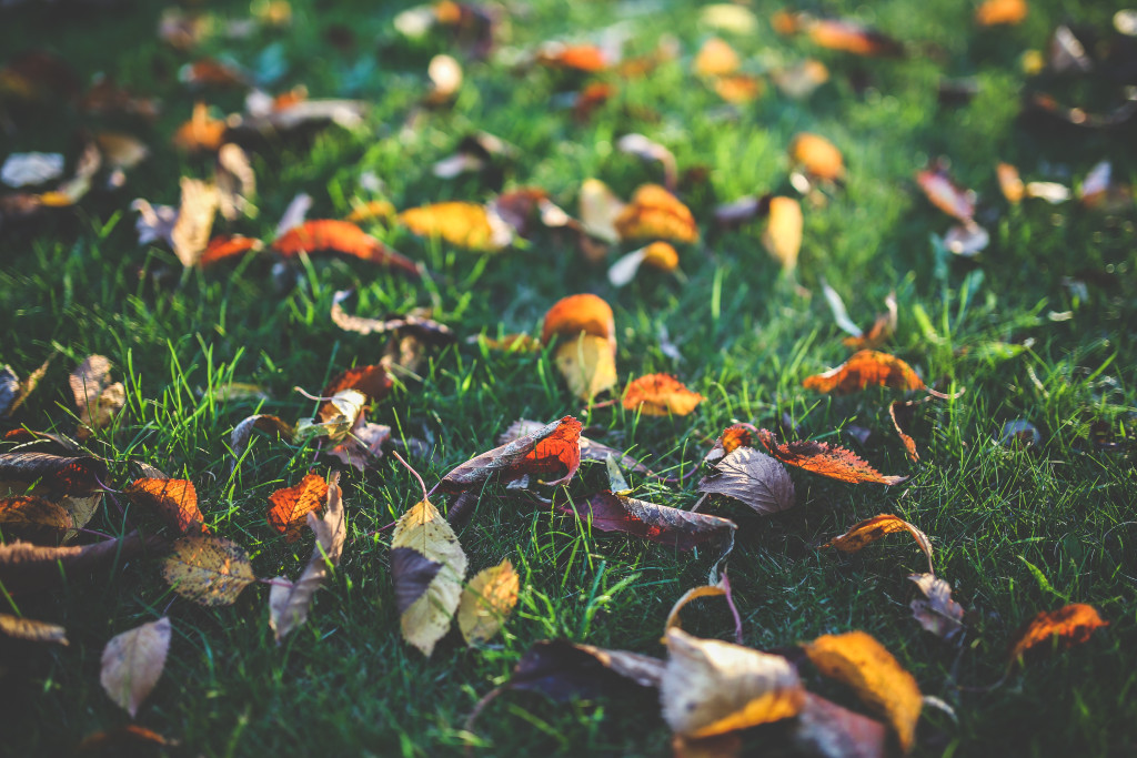 kaboompics.com_Yellow, orange and red autumn leaves
