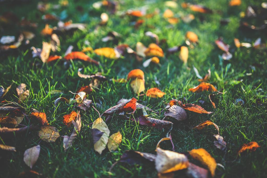 kaboompics.com_Yellow, orange and red autumn leaves