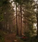 Oltre il fitto del bosco